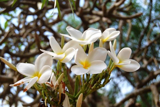 fiore bianco primo piano